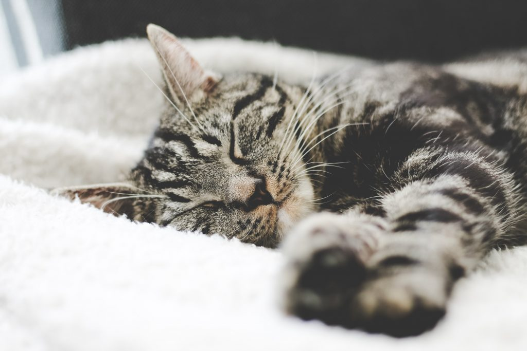 Getting enough sleep and managing stress can help decrease cravings.